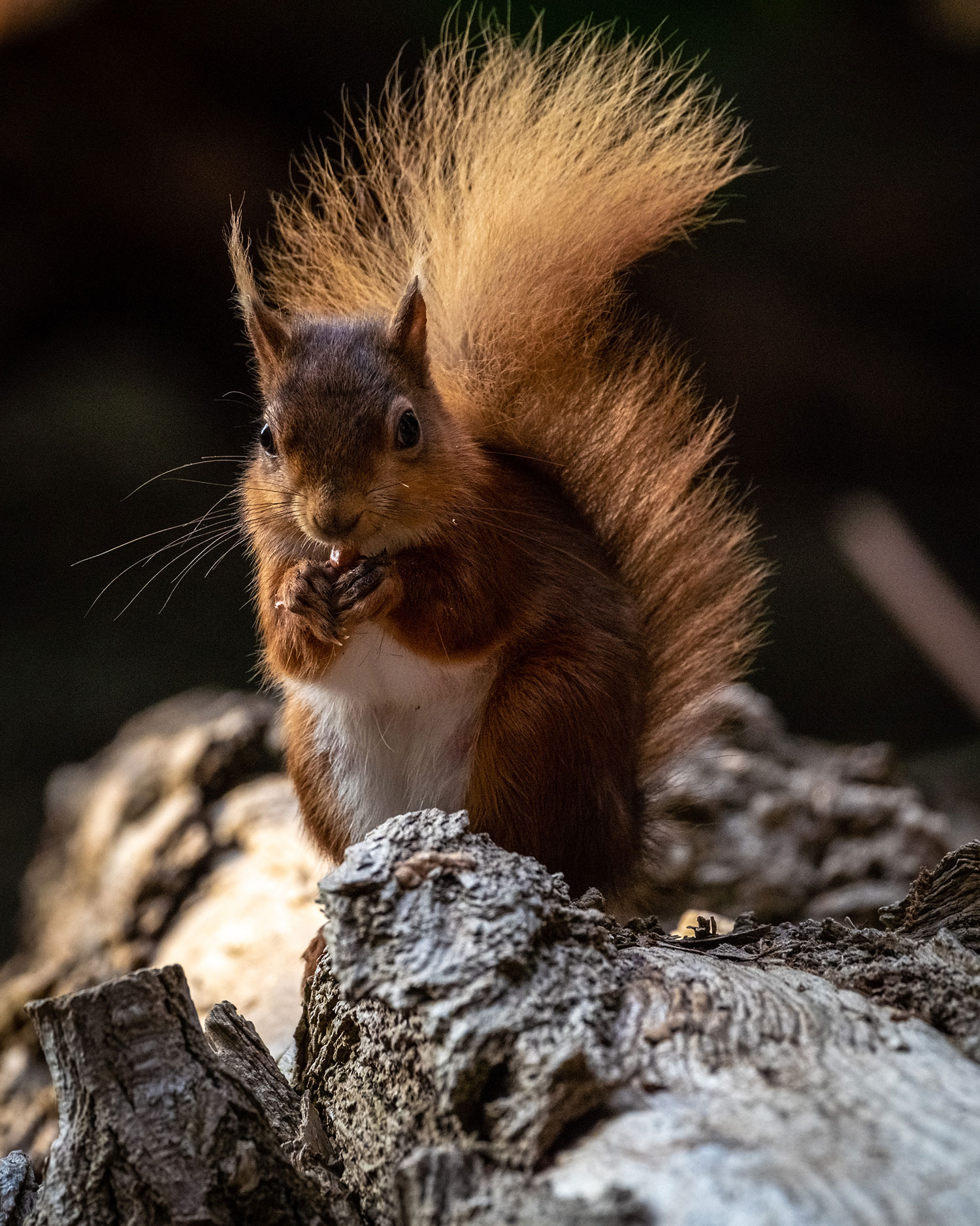 Brownsea Island Wildlife Photography