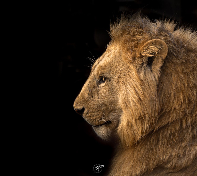 Sony safari lens hire