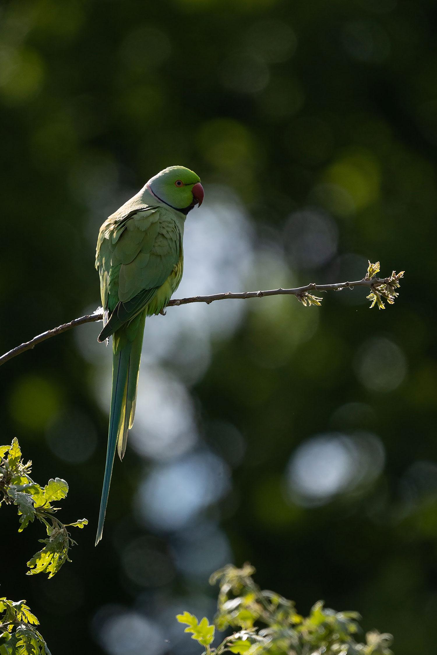 Sony bird photography